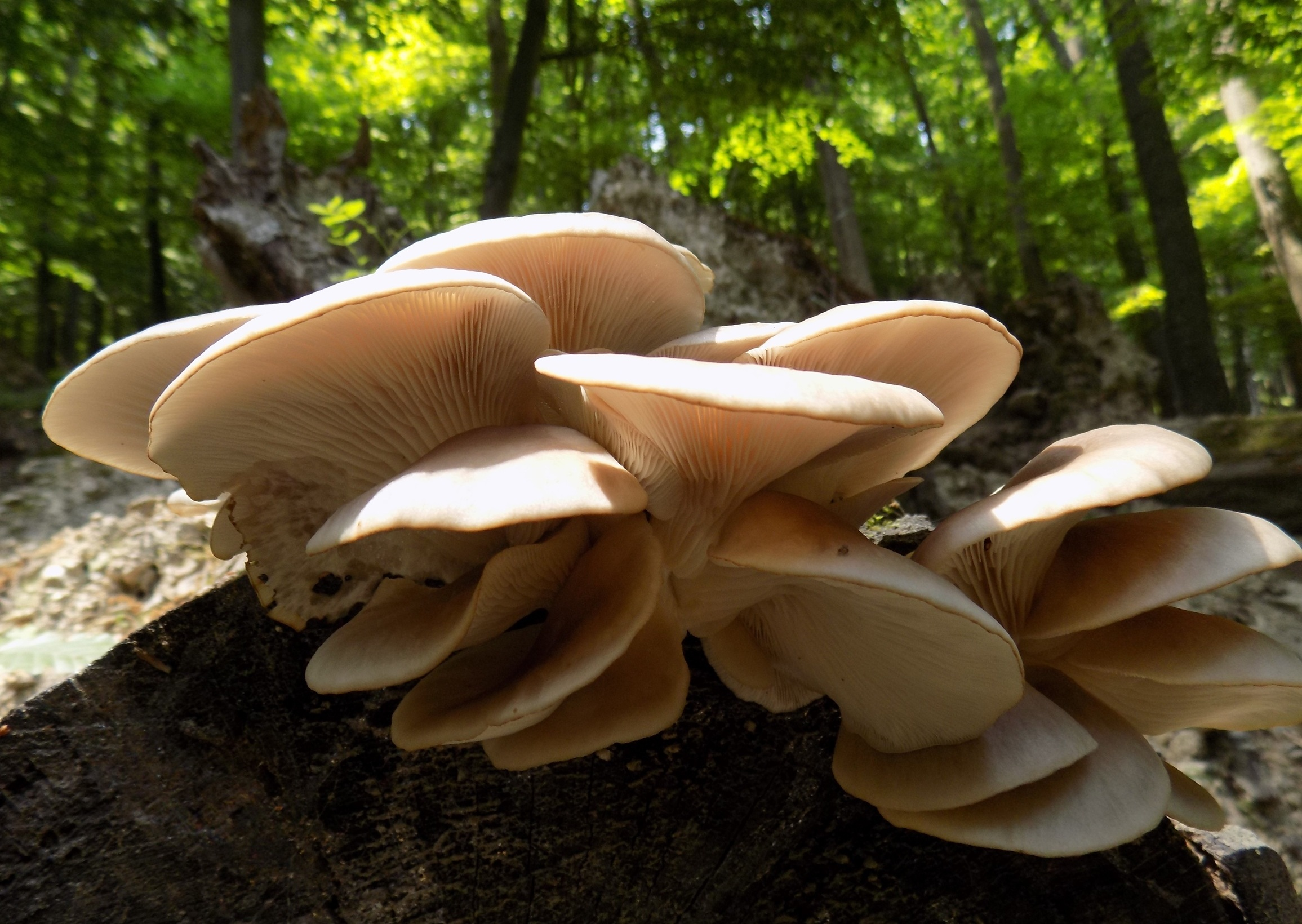 the fungi project -