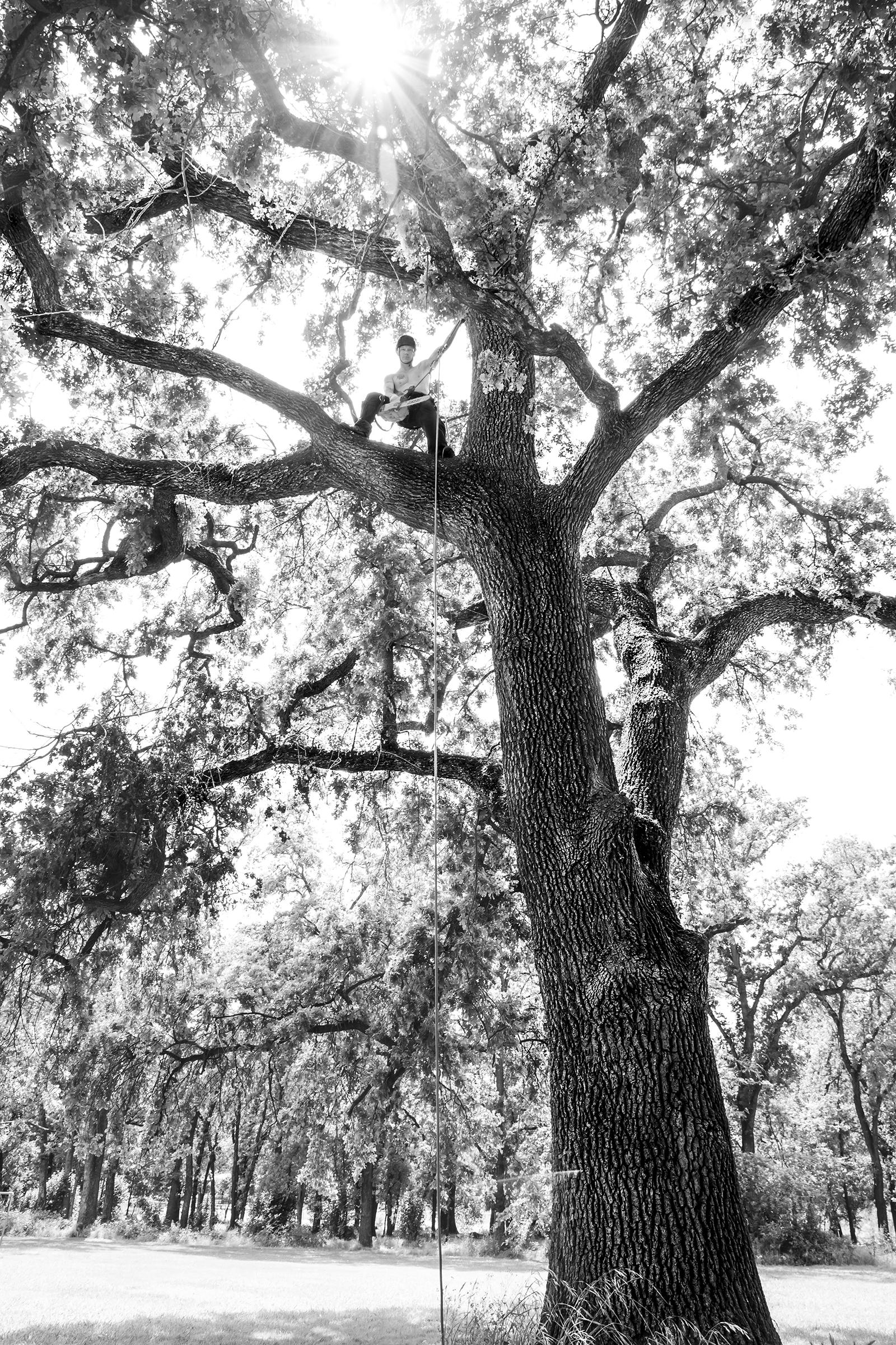 TROY up in TREE_M sized.jpg