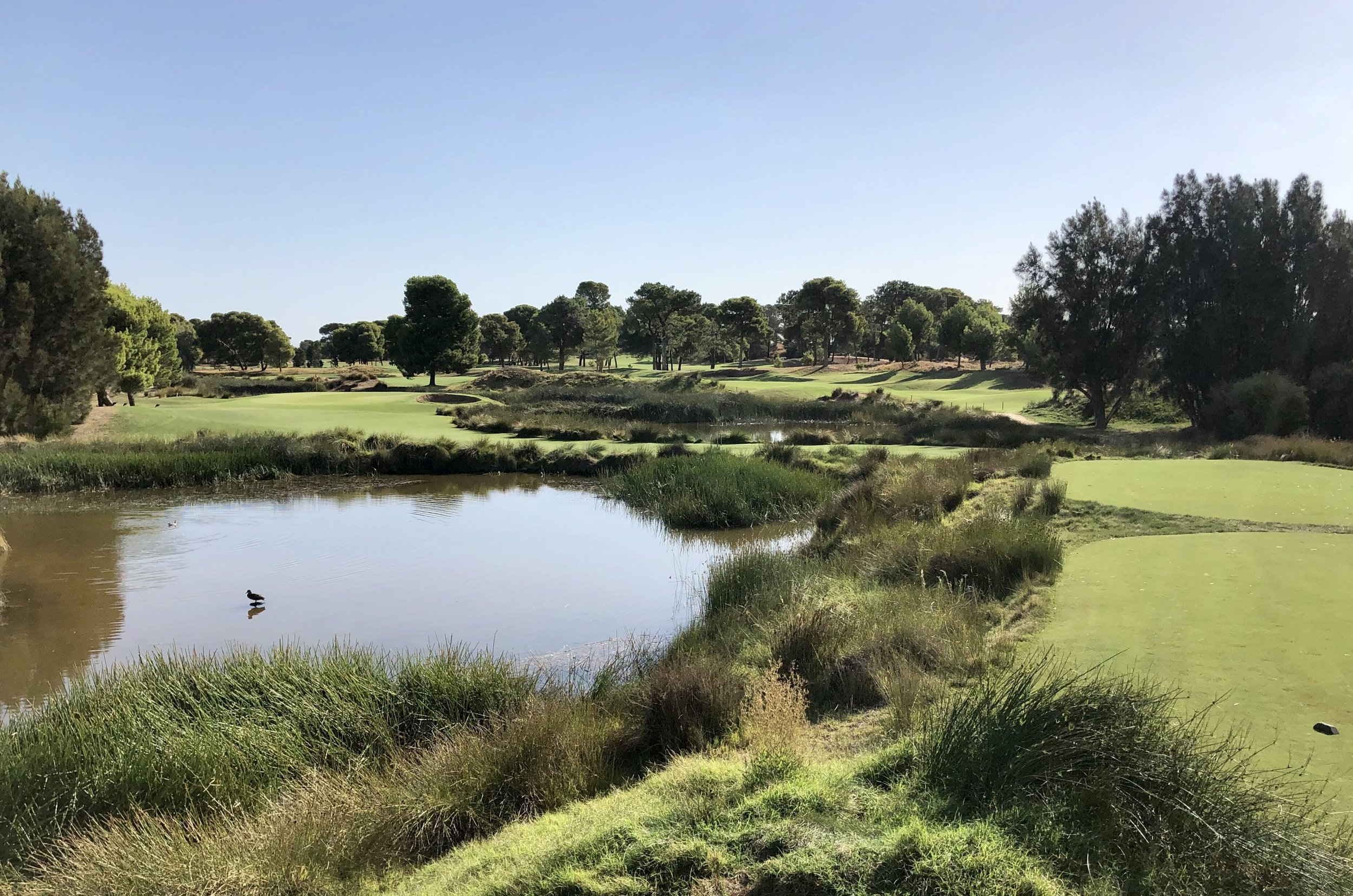 16th hole and ASR March2018.jpeg