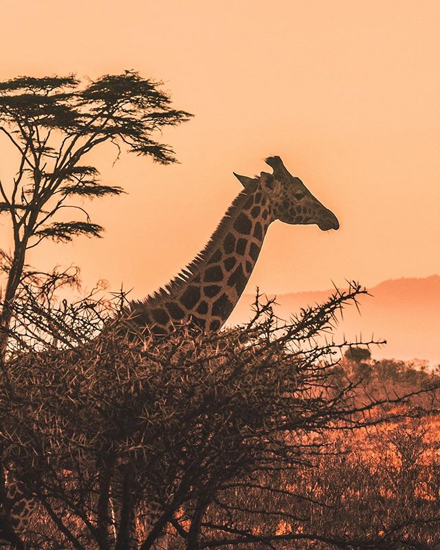 """Join us on our epic """"Tanzania: Faces of Nature"""" filmmaking and photography mentorship and travel through the most incredible landscapes the world has to offer. Immerse yourself with some of the most unique tribes in Africa and live amongst the spectacular wildlife, all while learning about impactful storytelling from a professional filmmaker @jiganatra. Check the link in our bio to see the itinerary! . .  #authentic #sustainabletourism #ecotourism #cinematographylife #youngfilmmakers #cameragear #filmmakersworld #filmcrew #safarilive #wildlifephotography #kenya #namibia #tanzania #travel #travelinfluencer #conservation #ocean #stonetown #island  #wanderlust #gopro #wildlife #dji #osmoaction"""