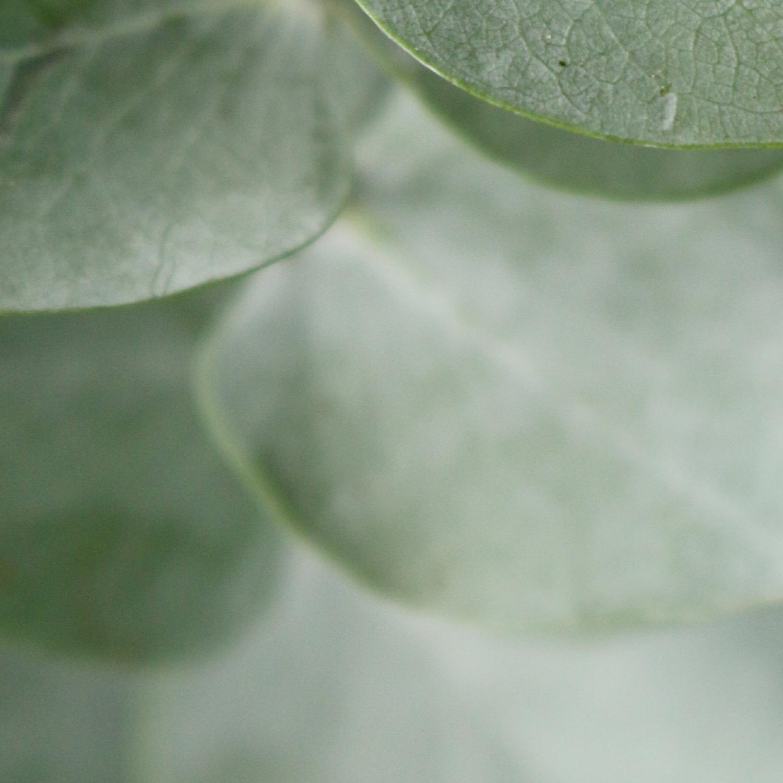 greenery-banner.jpg