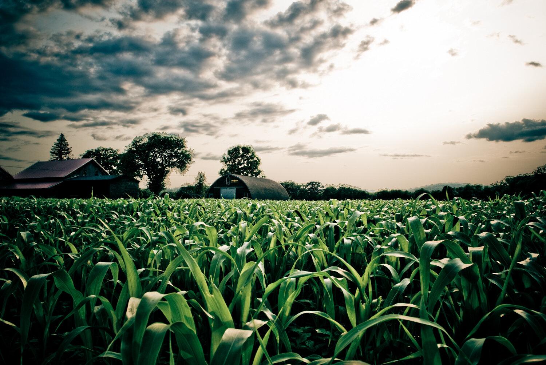 Nature-08.jpg