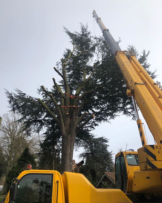 More tree removals . Emergency structural failure ( TPO ) five day order . 25-35 mph winds hard work but awesome team .. you guys are amazing