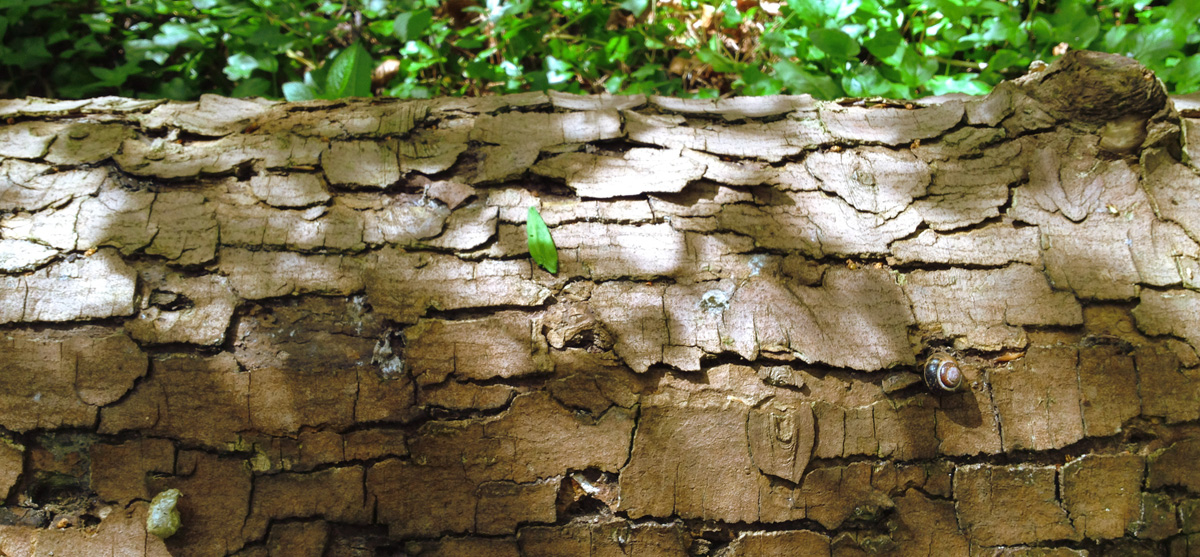 footer-dappled-trunk.jpg