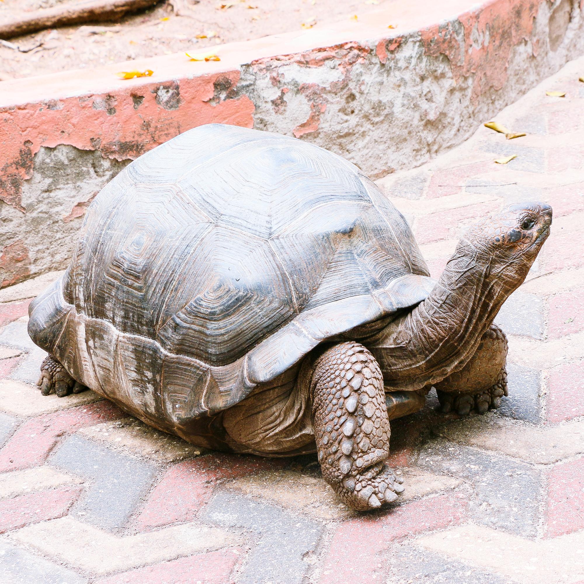 Turtle sanctuary Prison Island Zanzibar