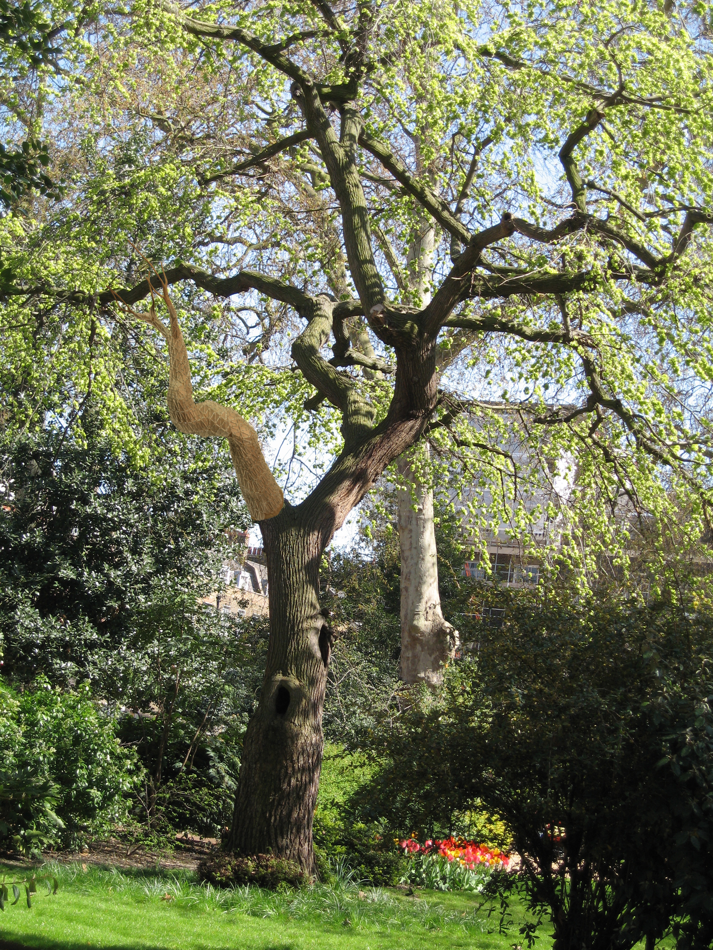 Artificial Limb : In response to man's desire to tamper with nature and the urban landscape, a prosthetic limb was designed for a wych elm in london…it also serves as a bird lodging.