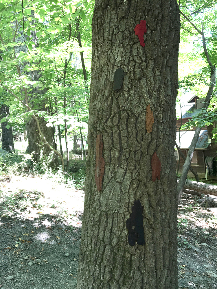Rearranging the furniture : painted bark from various trees
