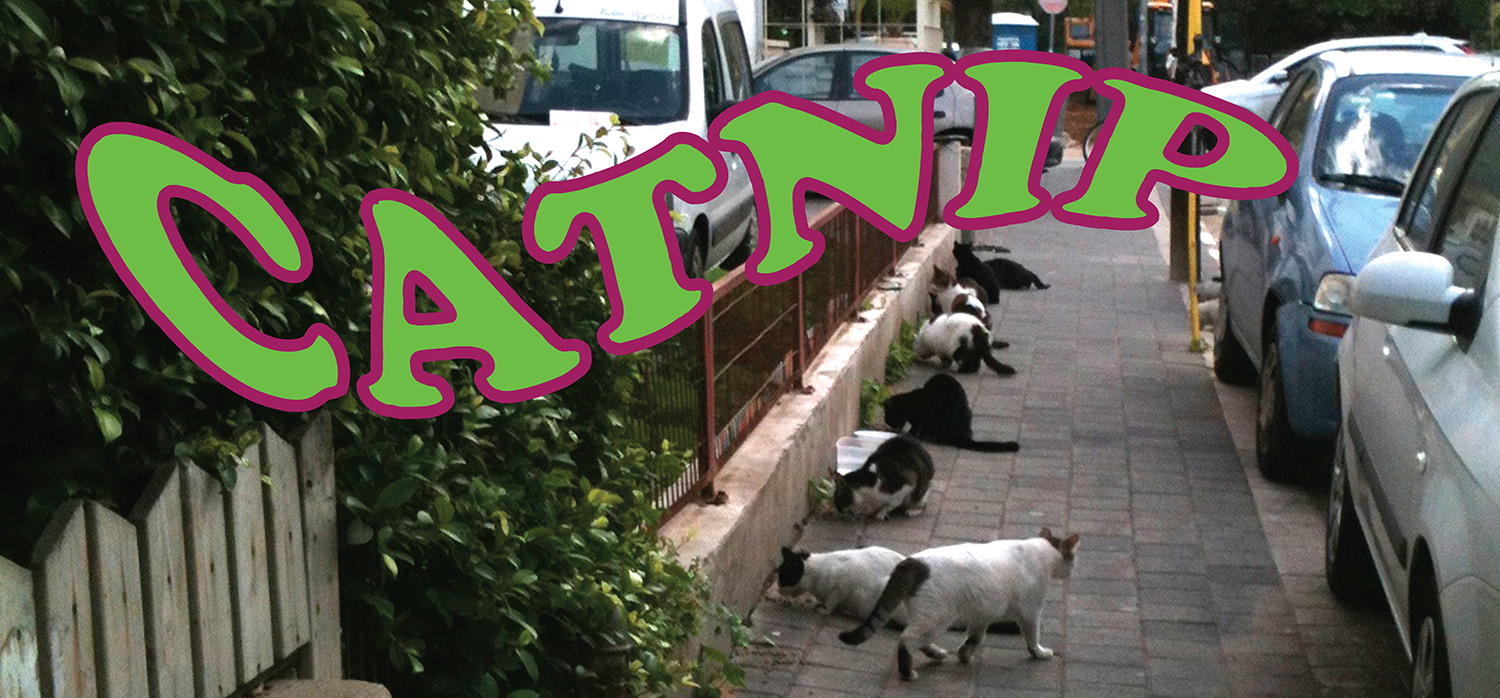 Catnip  catnip gardens were installed for urban feral cats…this is a short film about the project