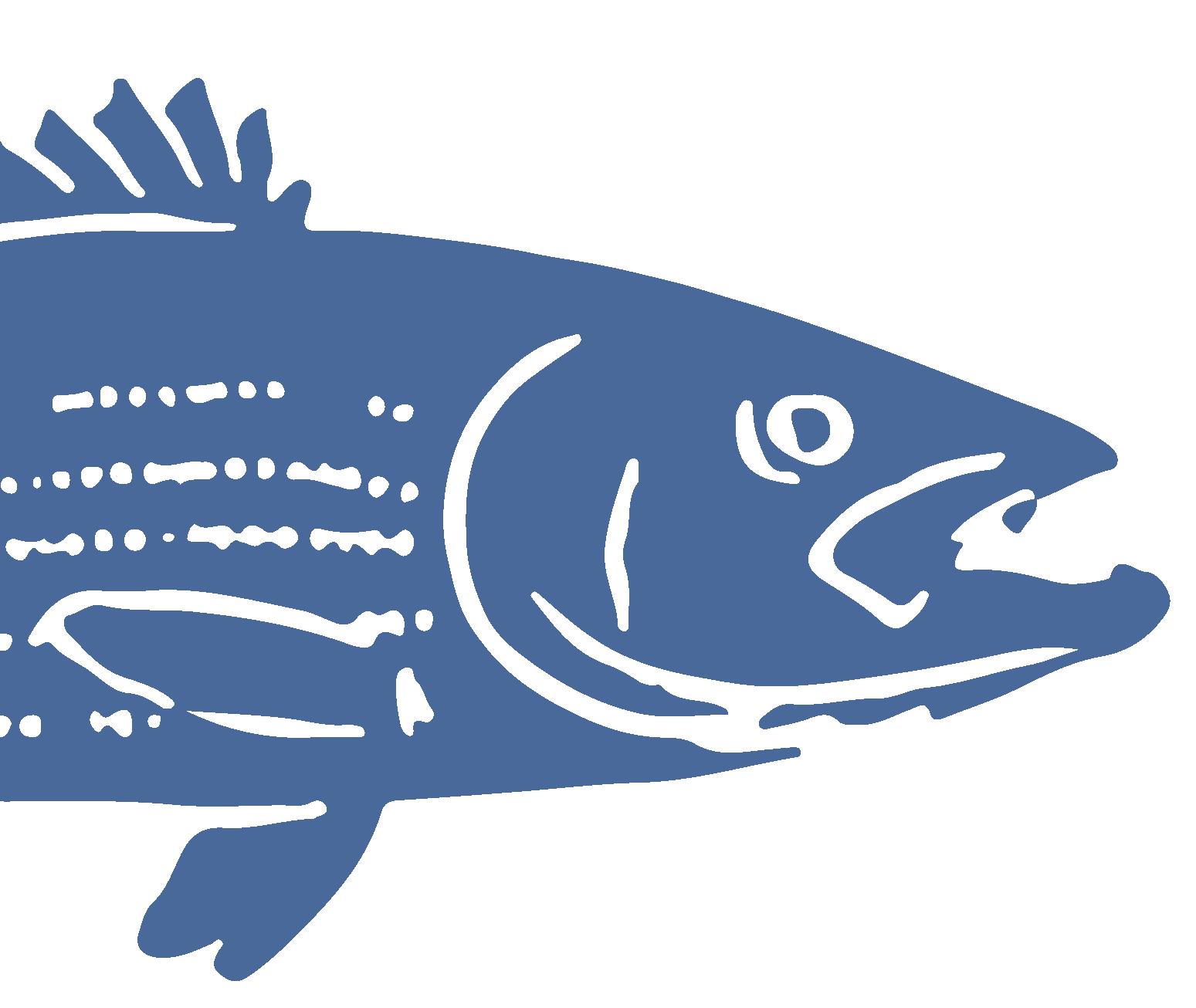 FishHead-01.png