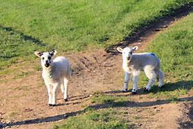 new-lambs-rookery-barn-glamping-s.jpg