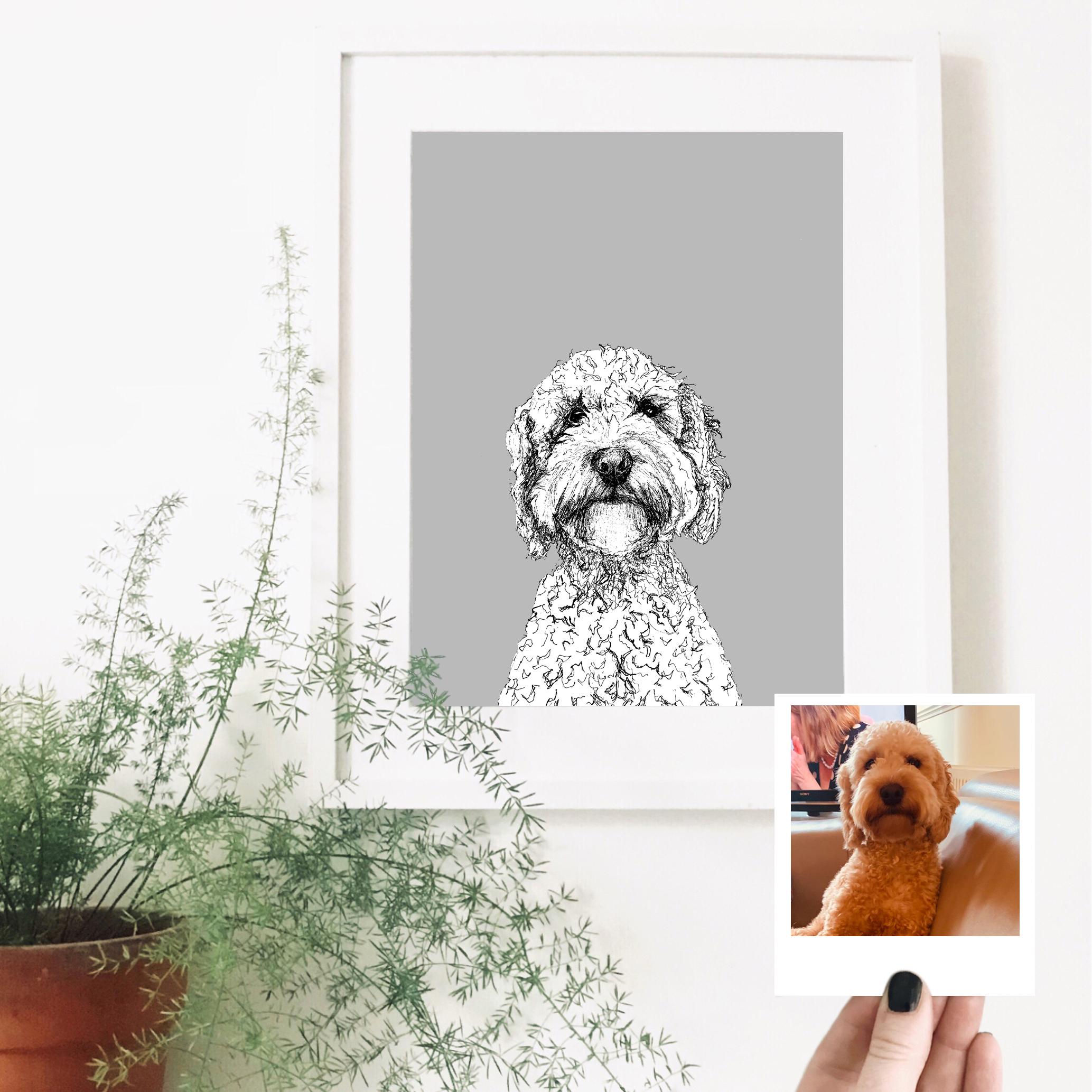 cockapoo-dog-pet-portrait.jpg