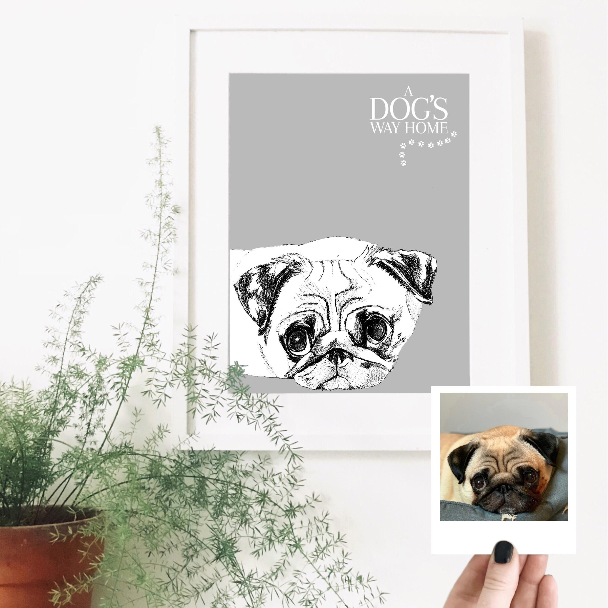 pug-dog-pet-portrait.jpg
