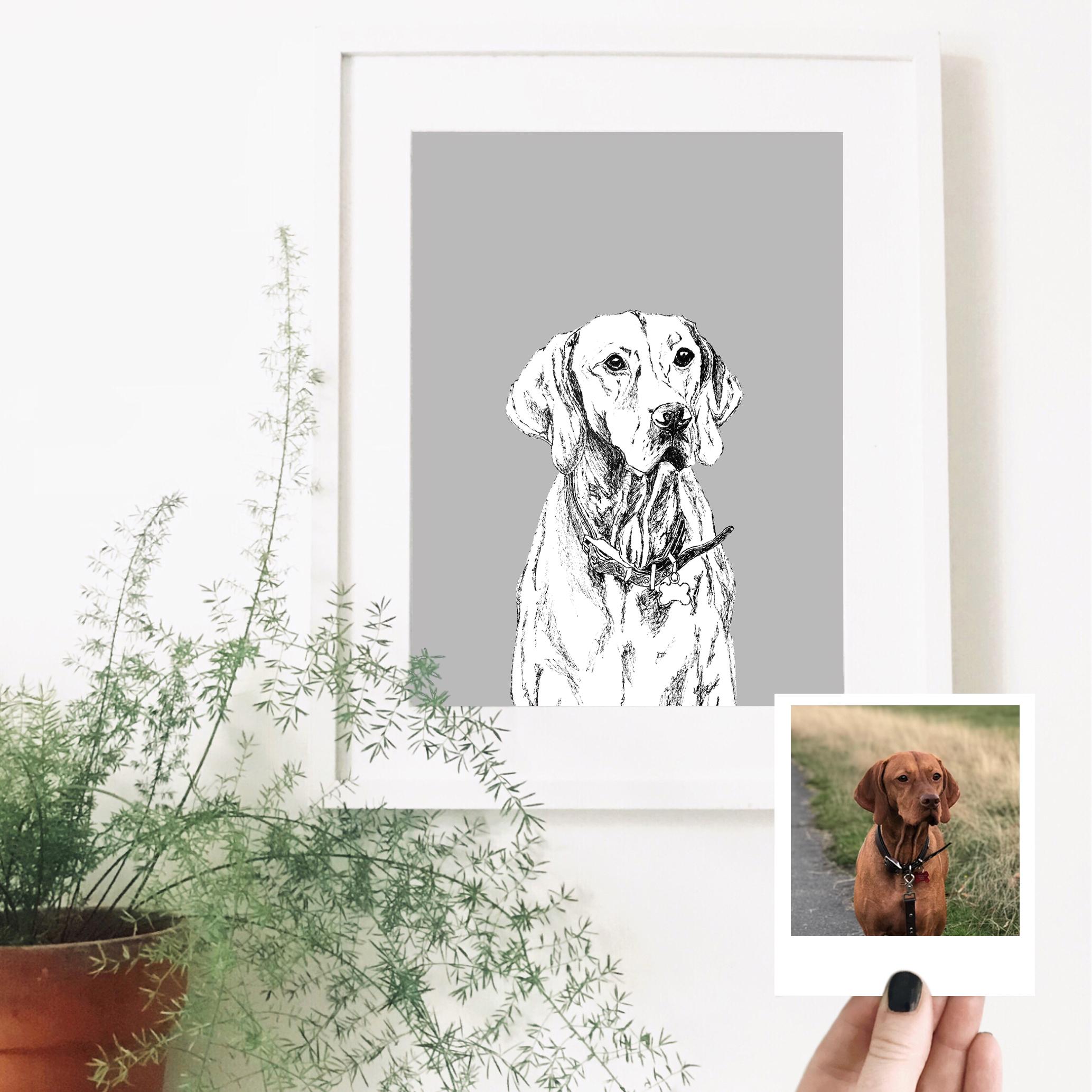 vizsla-pet-portrait-drawing.jpg