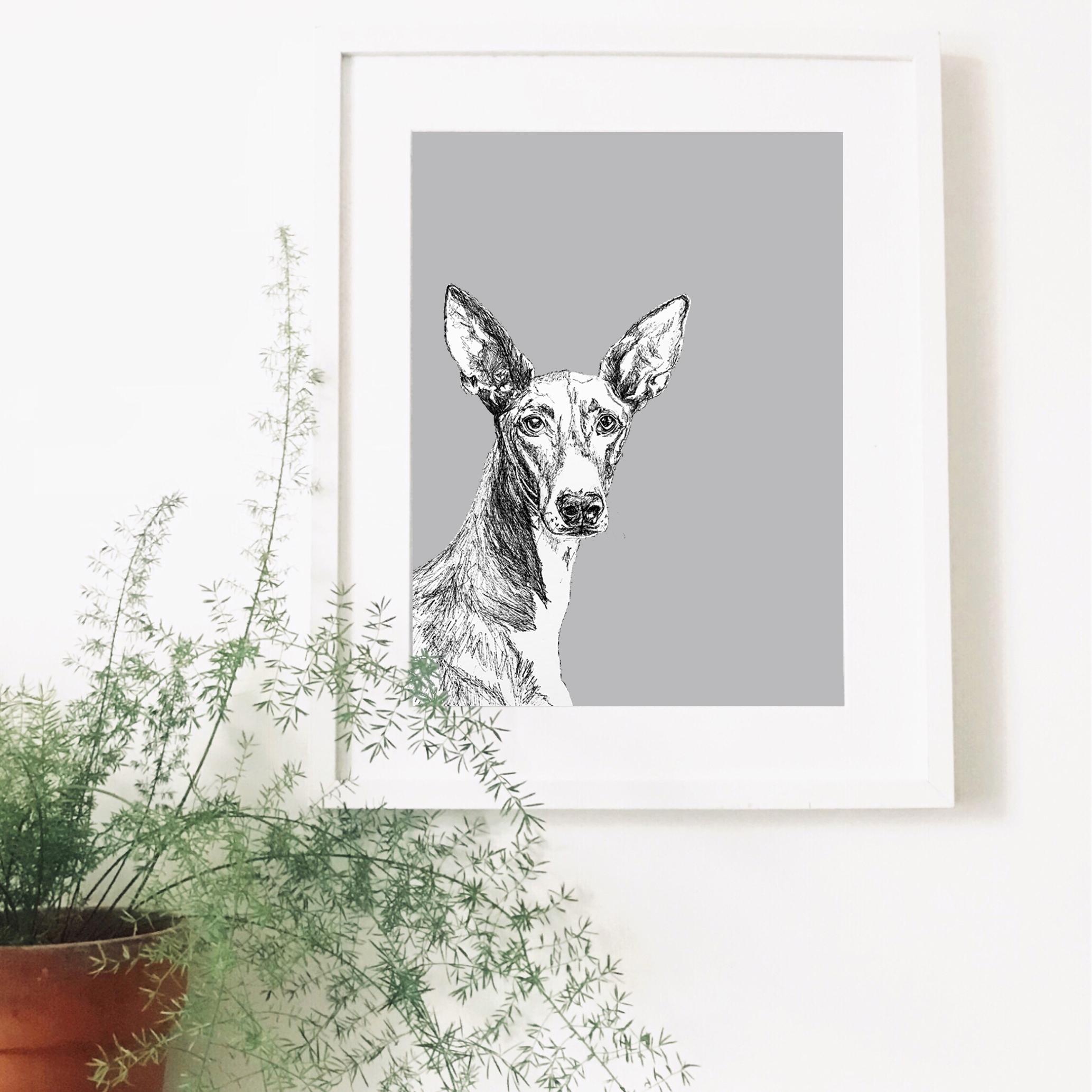 podenco-dog-pet-portrait-drawing.jpg