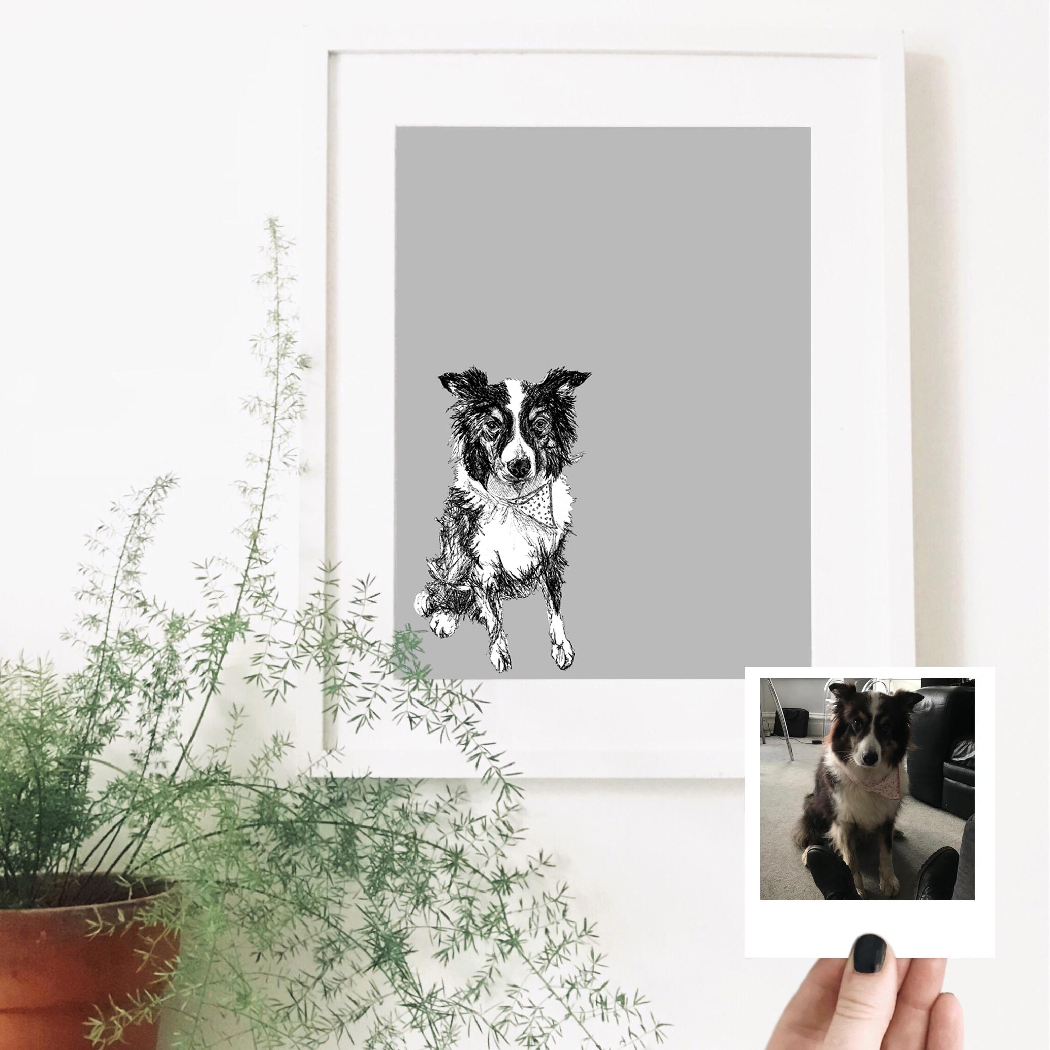 border-collie-dog-pet-portrait-drawing.jpg