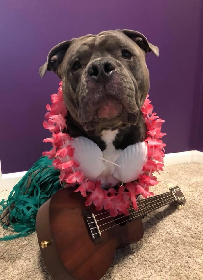 ukulele lessons manhattan ks