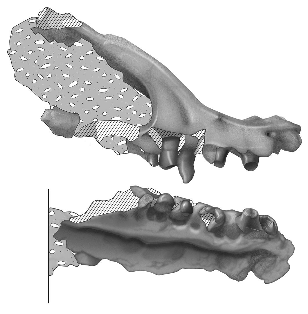 Dino Jaw - Graphite and Digital