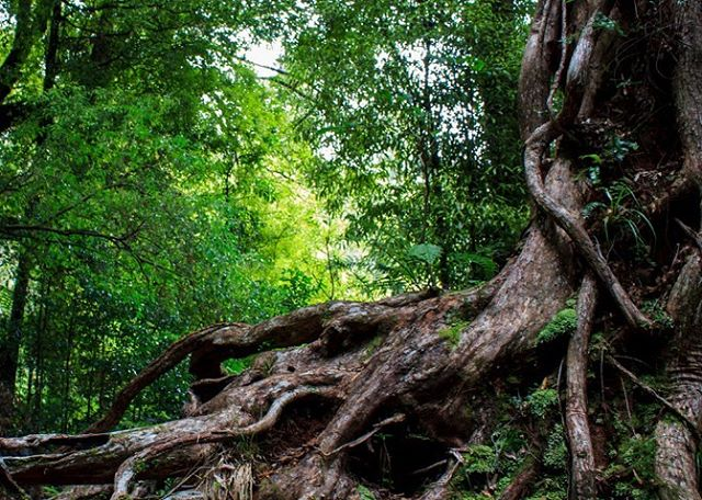 """#NewArticle on #Emerging: The Ancient Tree - """"Leaving St. Louis, I felt little hope that the splintered, broken stump of my church could find enough nourishment to go on living..."""" - Read more at the #linkinbio - #Emerging #EmergingMethodism #EmergingProject #EmergingUMC #UMChurch #UnitedMethodist #UMCCT #SpecialSession"""