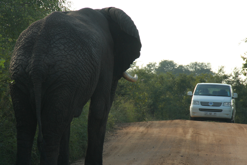 South Africa Elephant vs VW.jpg