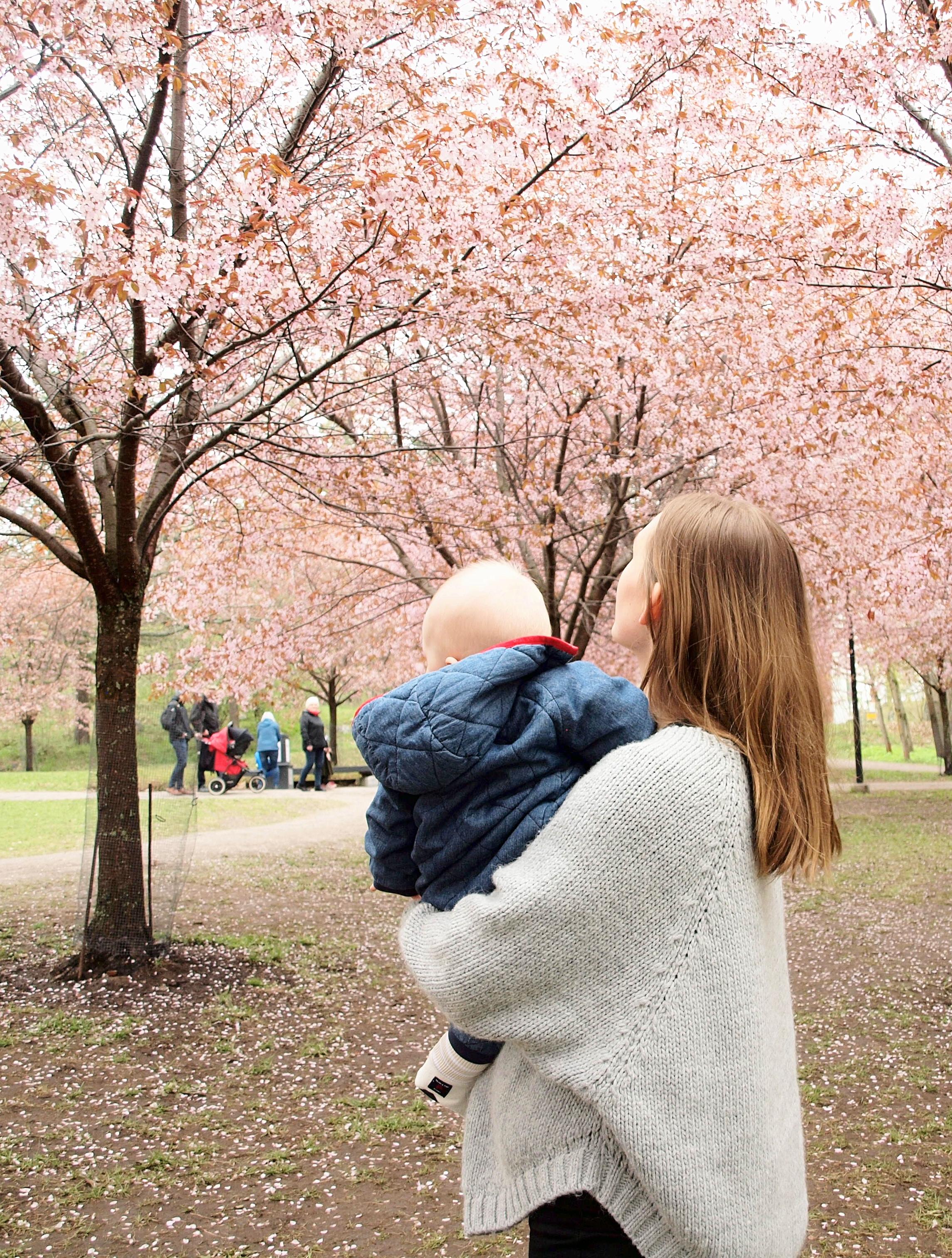 Tavallinenpaiva-kirsikkapuisto1.jpg