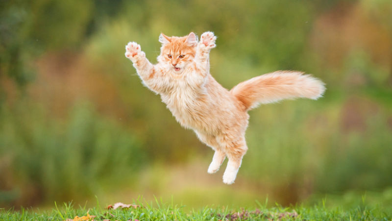 flyingcat.JPG