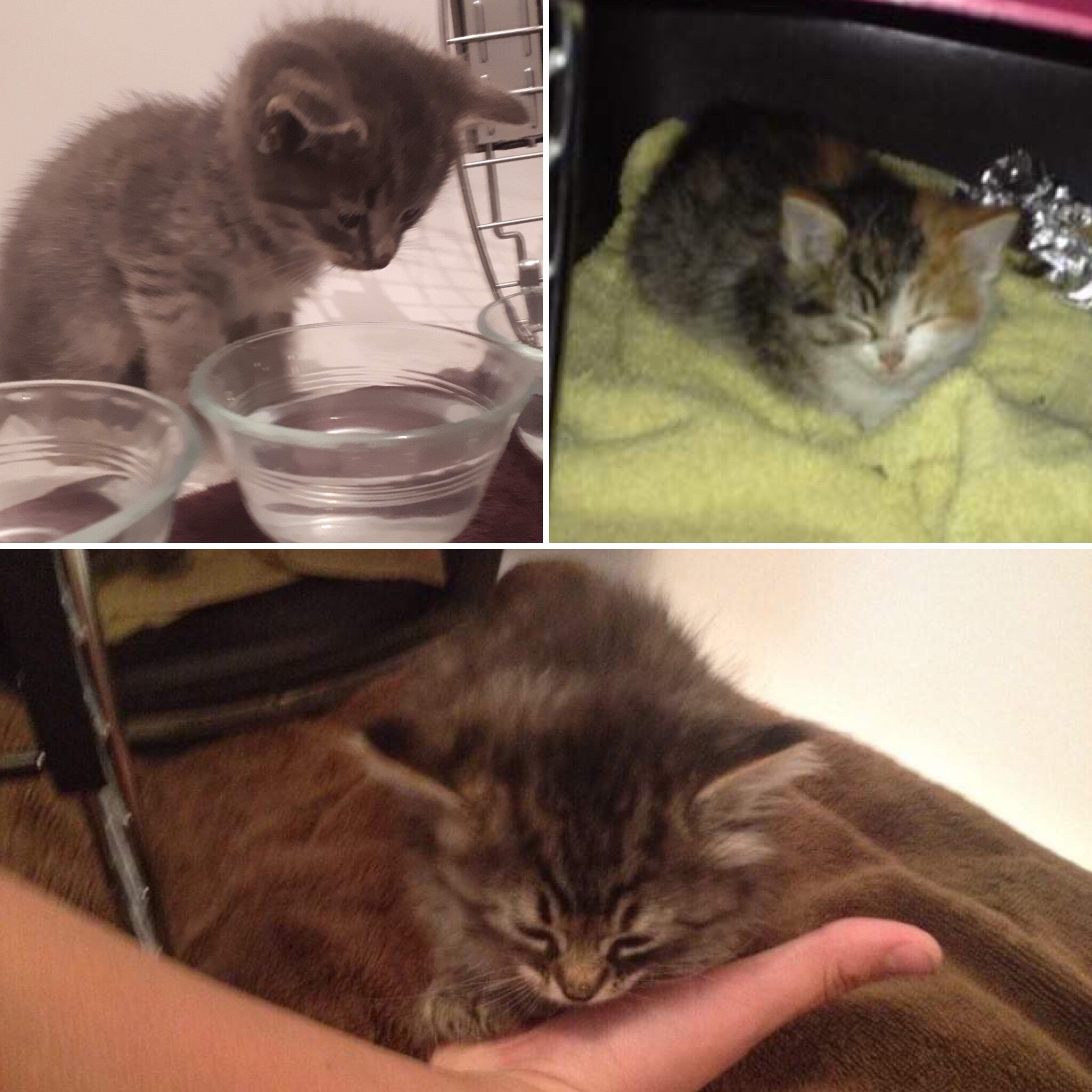 Upper left, Trooper; upper right, Pixie; bottom, Jellybean