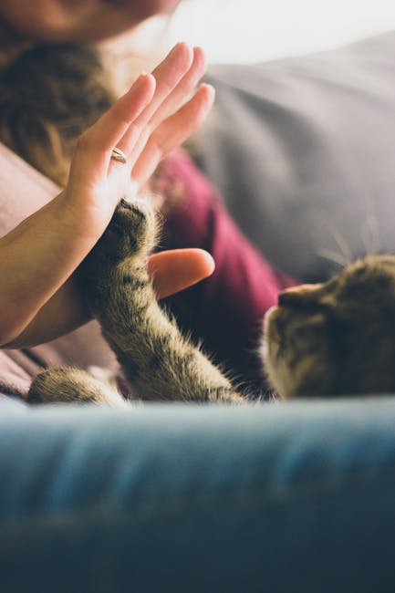 Cat gives their human a high five.