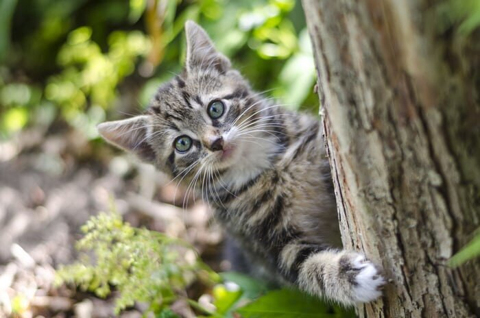Cat enjoying being in a tree.