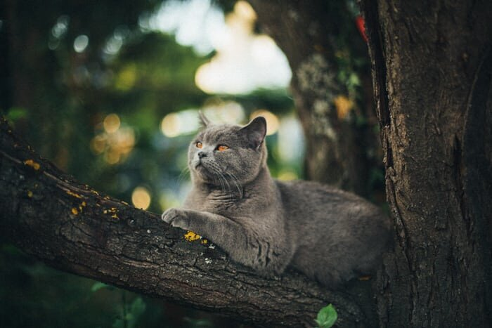 Cat chilling on a tree branch.