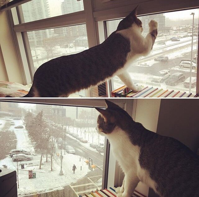 "My cat, Tom, likes looking out at the snow and trying to ""catch"" it."