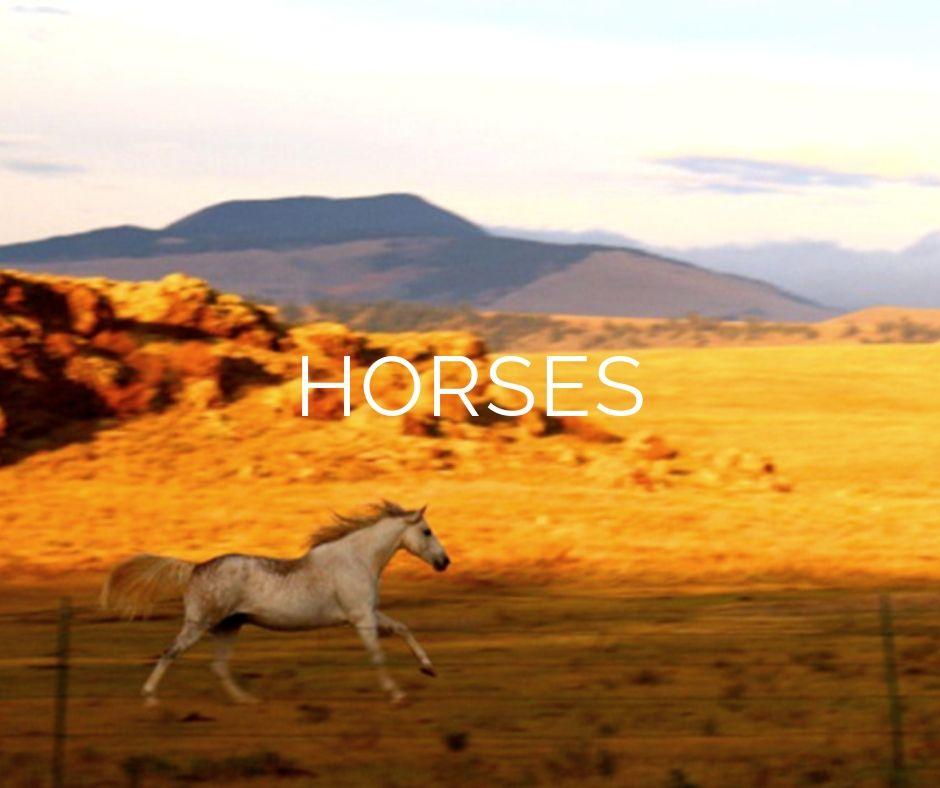 Full_Circle_Alliance_Horses.jpg