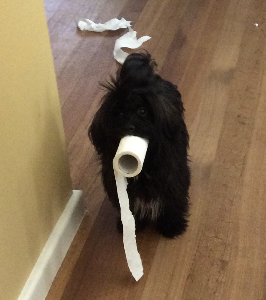The toilet roll thief.