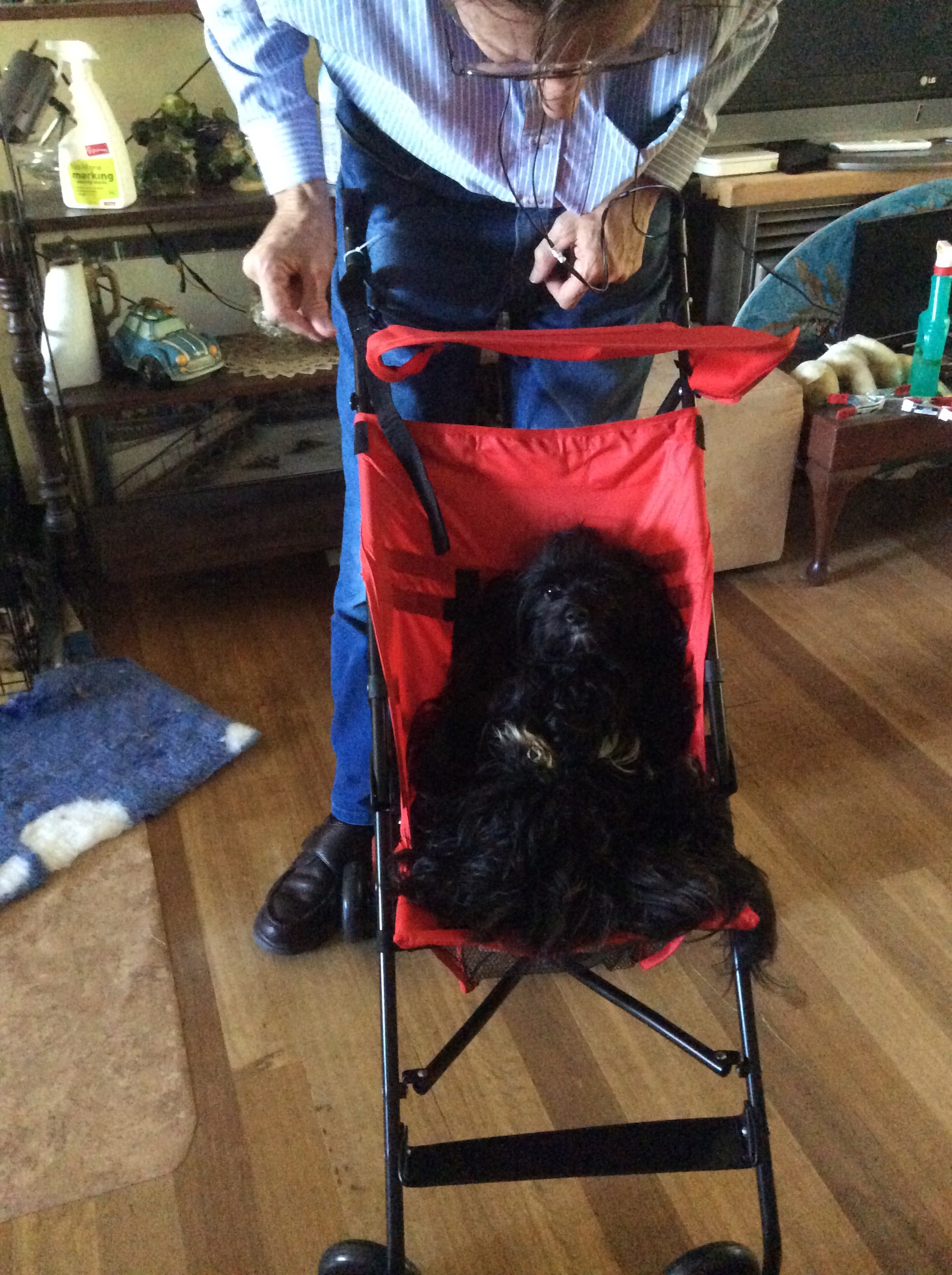 Ted, trying out the stroller for our grandson.