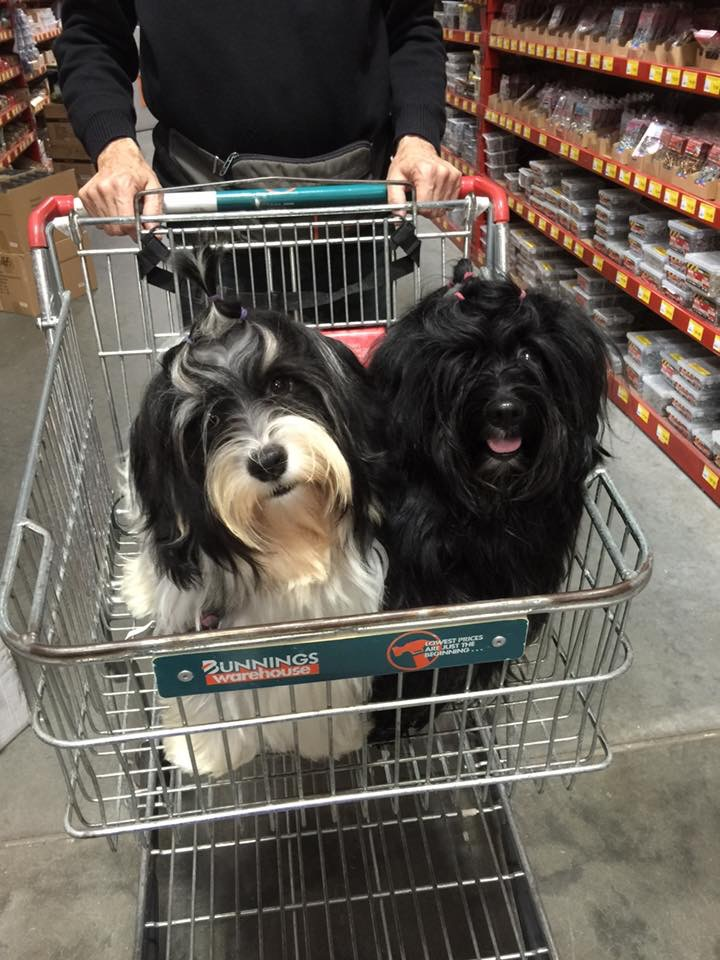 Ted and Rebel enjoy shopping at Bunnings.