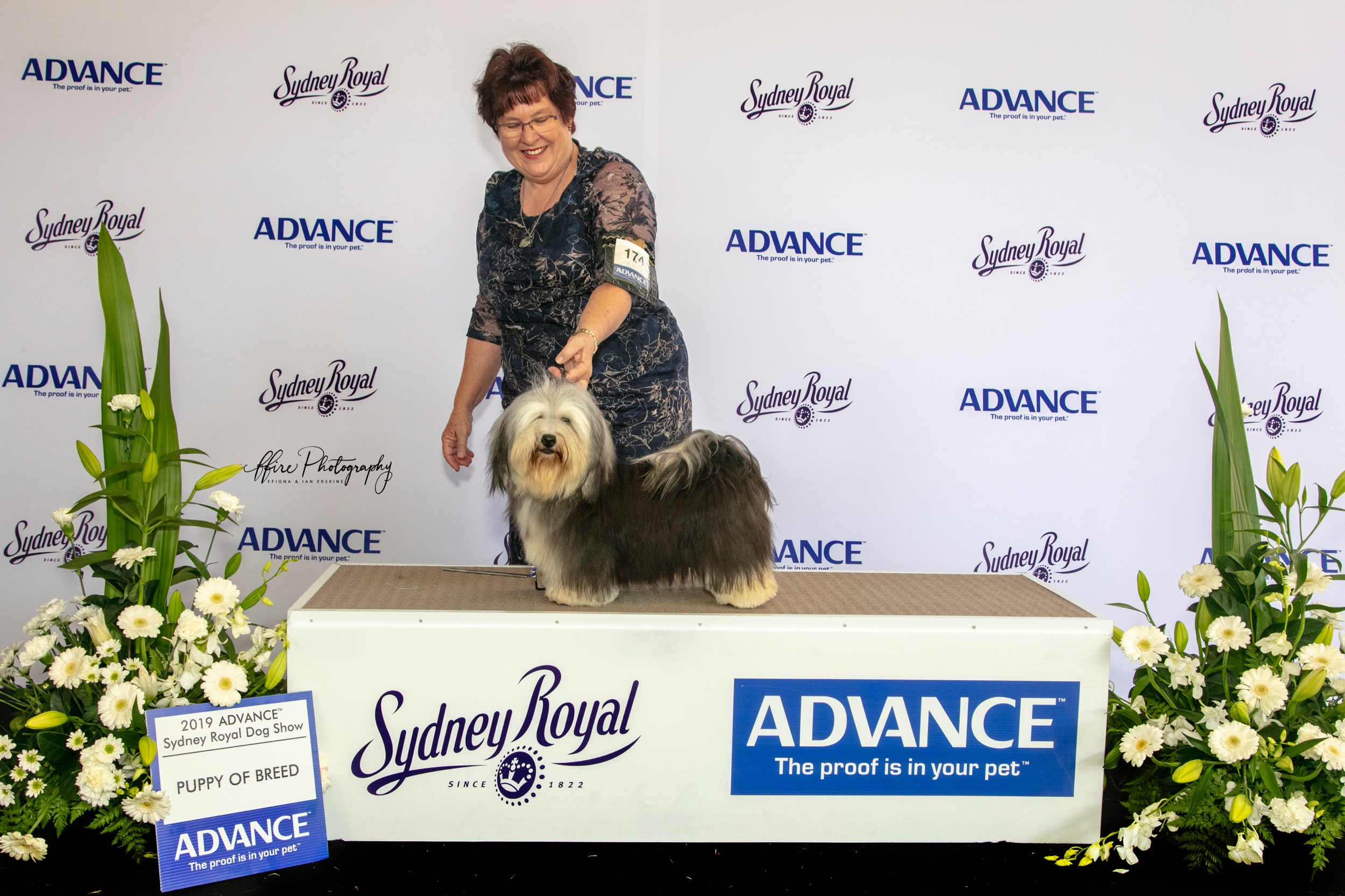 Alexis (AUSTRALIAN CHAMPION Beljala Applause Please) was Best Puppy Of Breed at the 2019 Sydney Royal Dog Show.