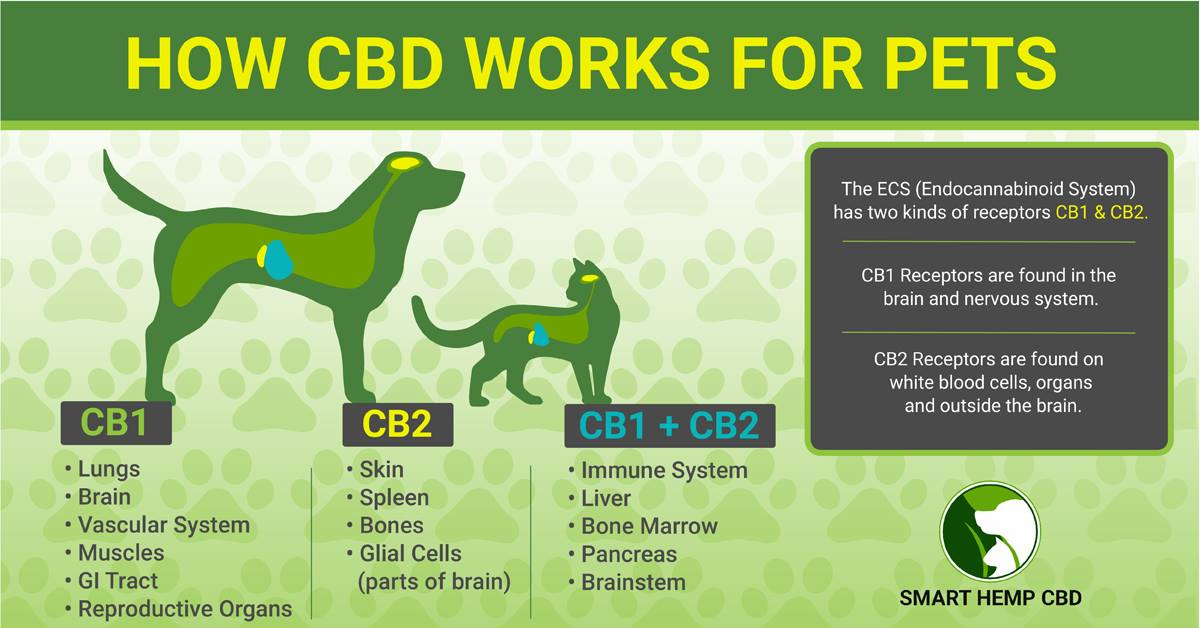 endocannabinoid system.jpg