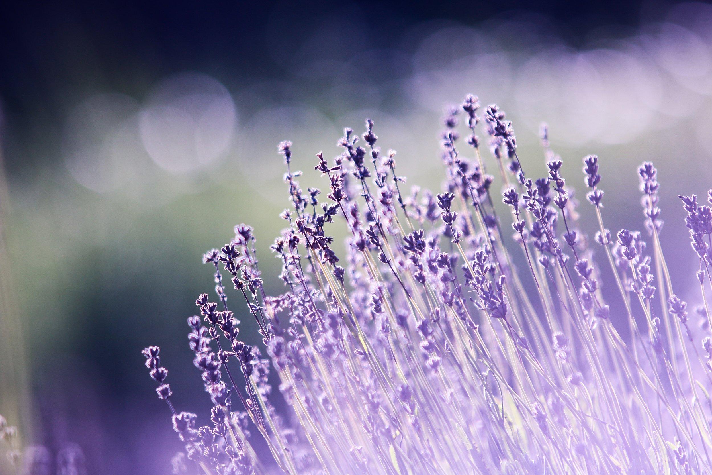 aromatherapy-beautiful-blooming-286763.jpg