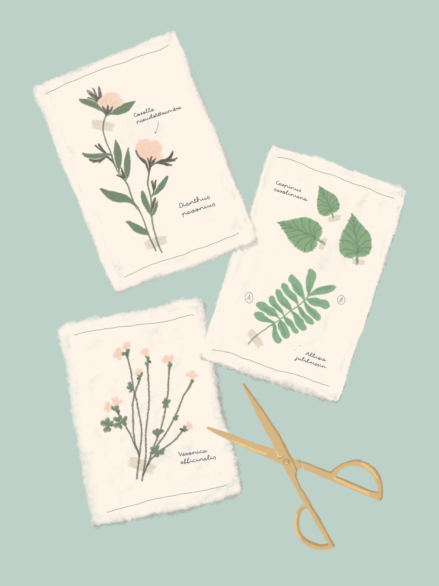 herbarium_studiohortie.jpg