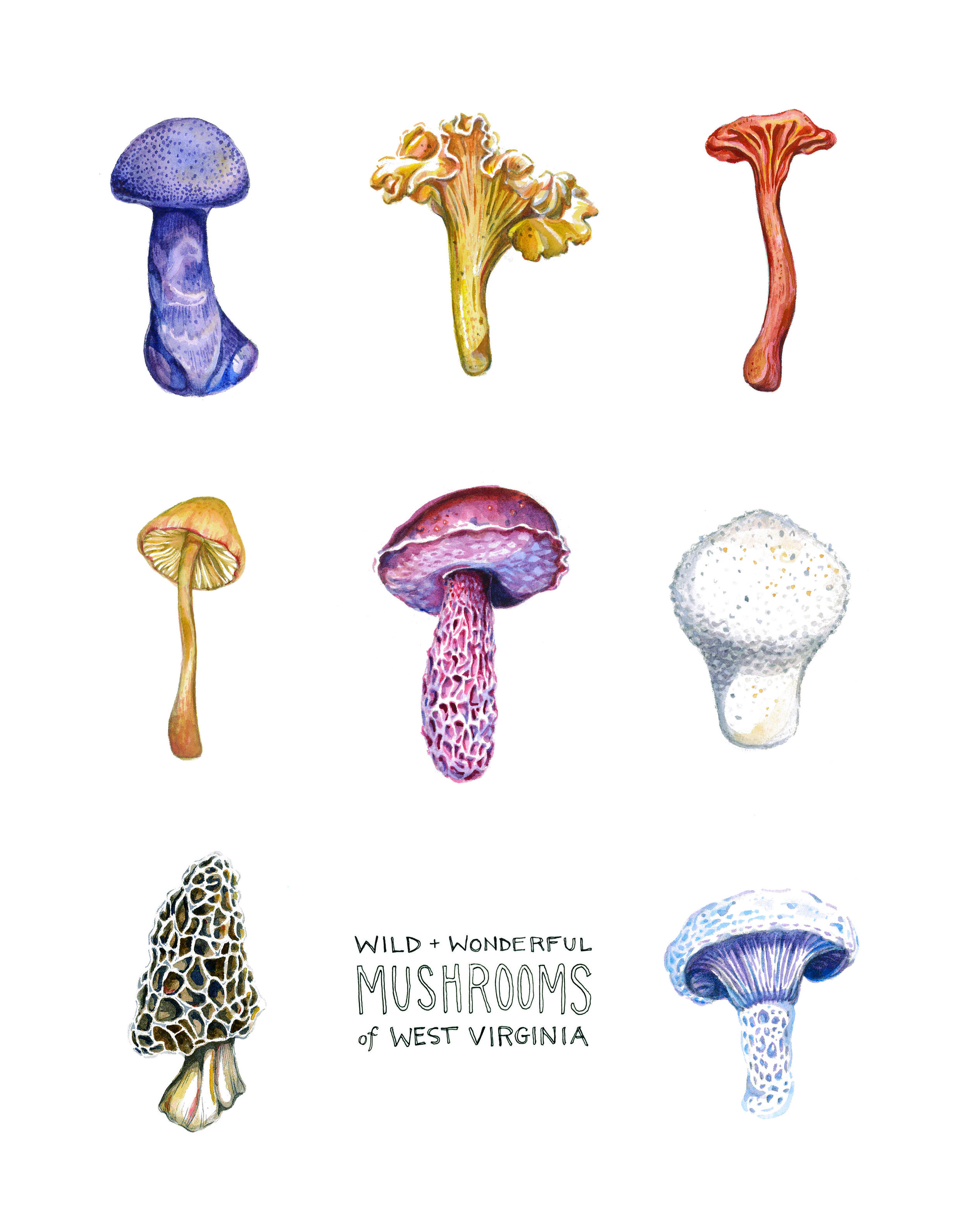 Mushrooms_of_WV.jpg