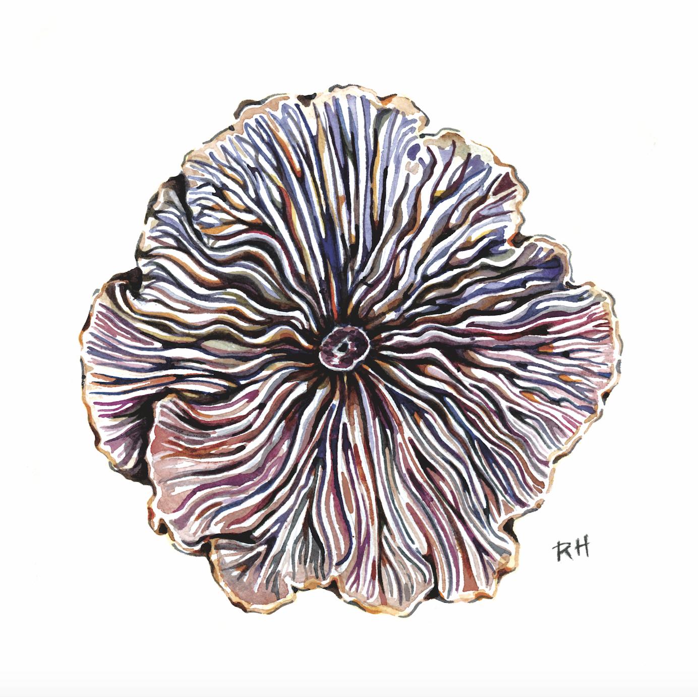 Mushroom gill painting