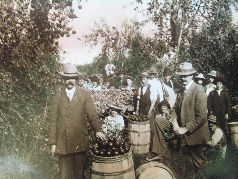 John Thwaite started Fruit Hill Orchard in Winchester, VA in 1929.