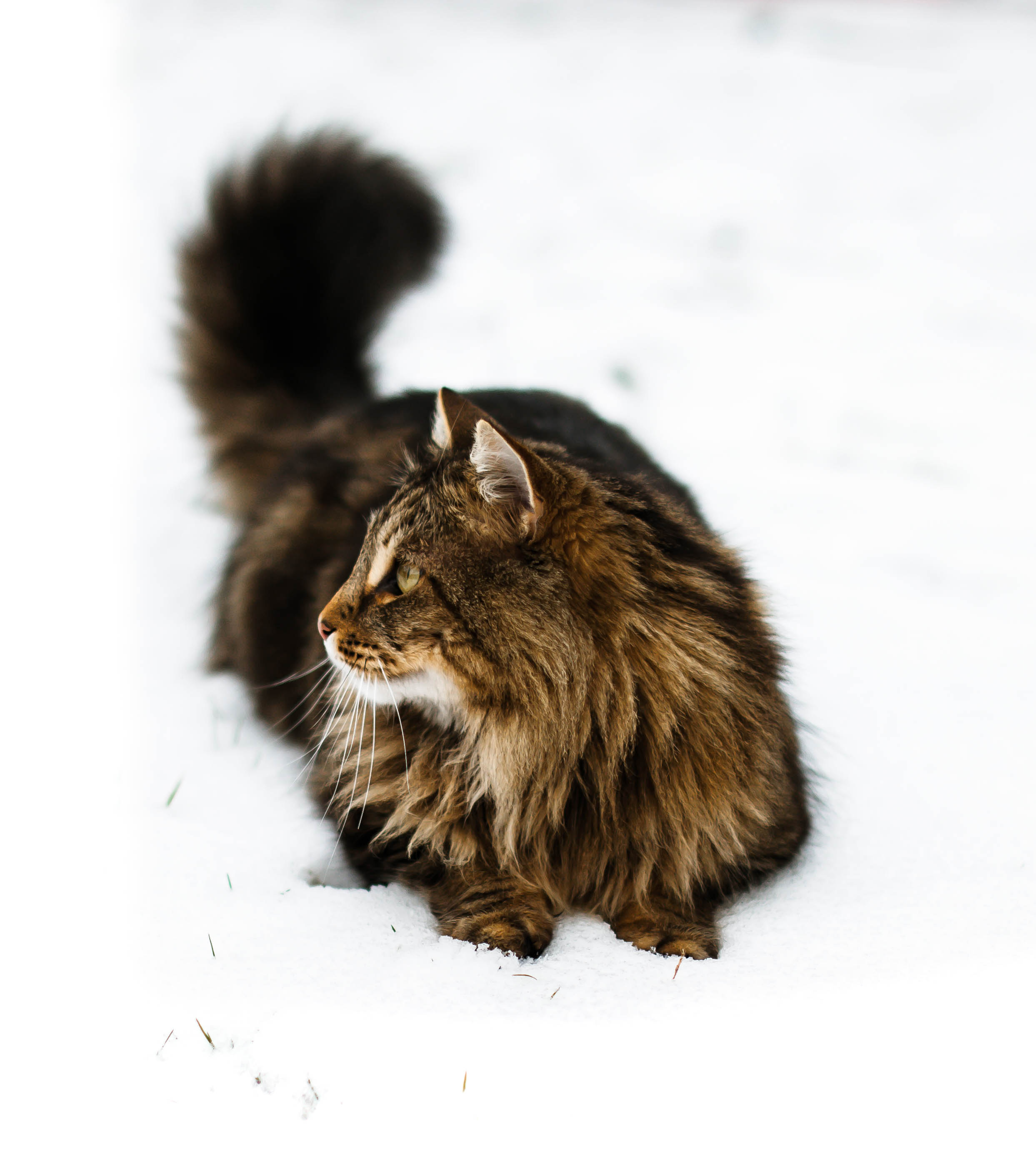 Cat photograph.jpg