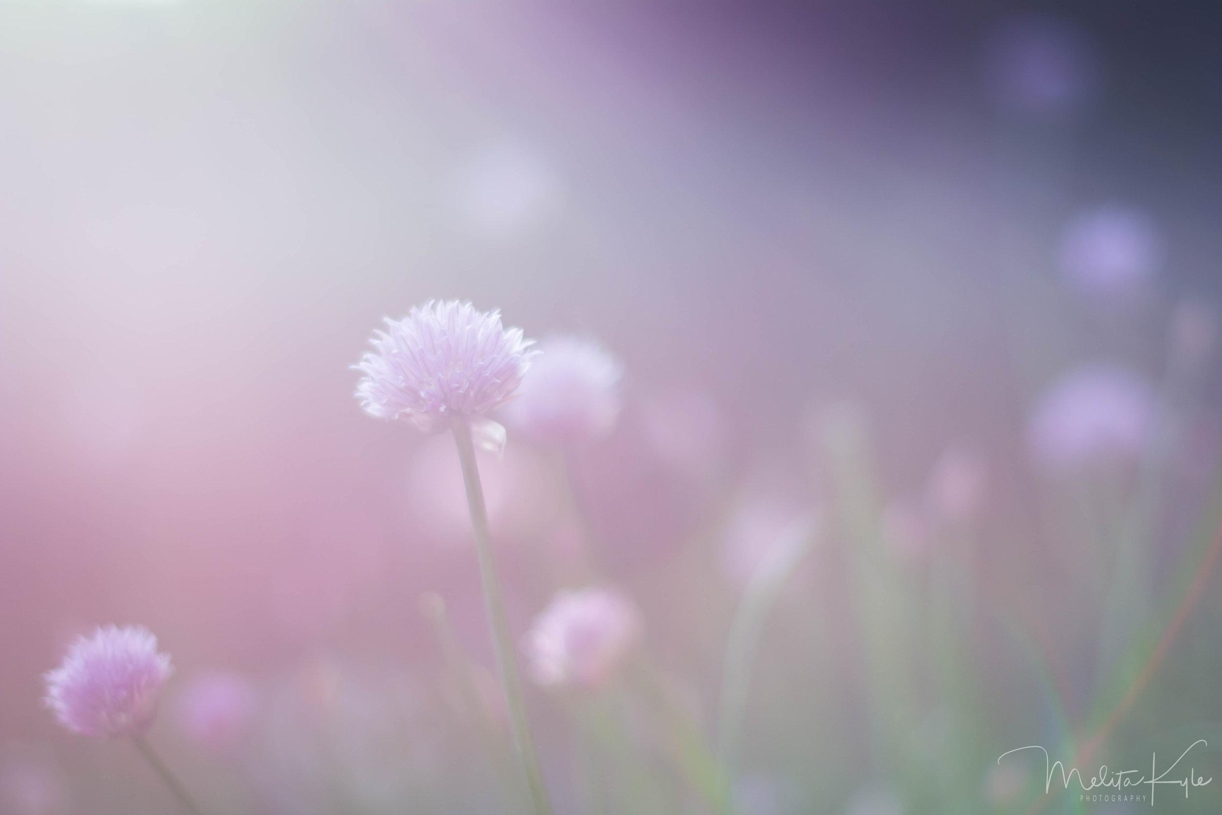 Evening Spring .jpg