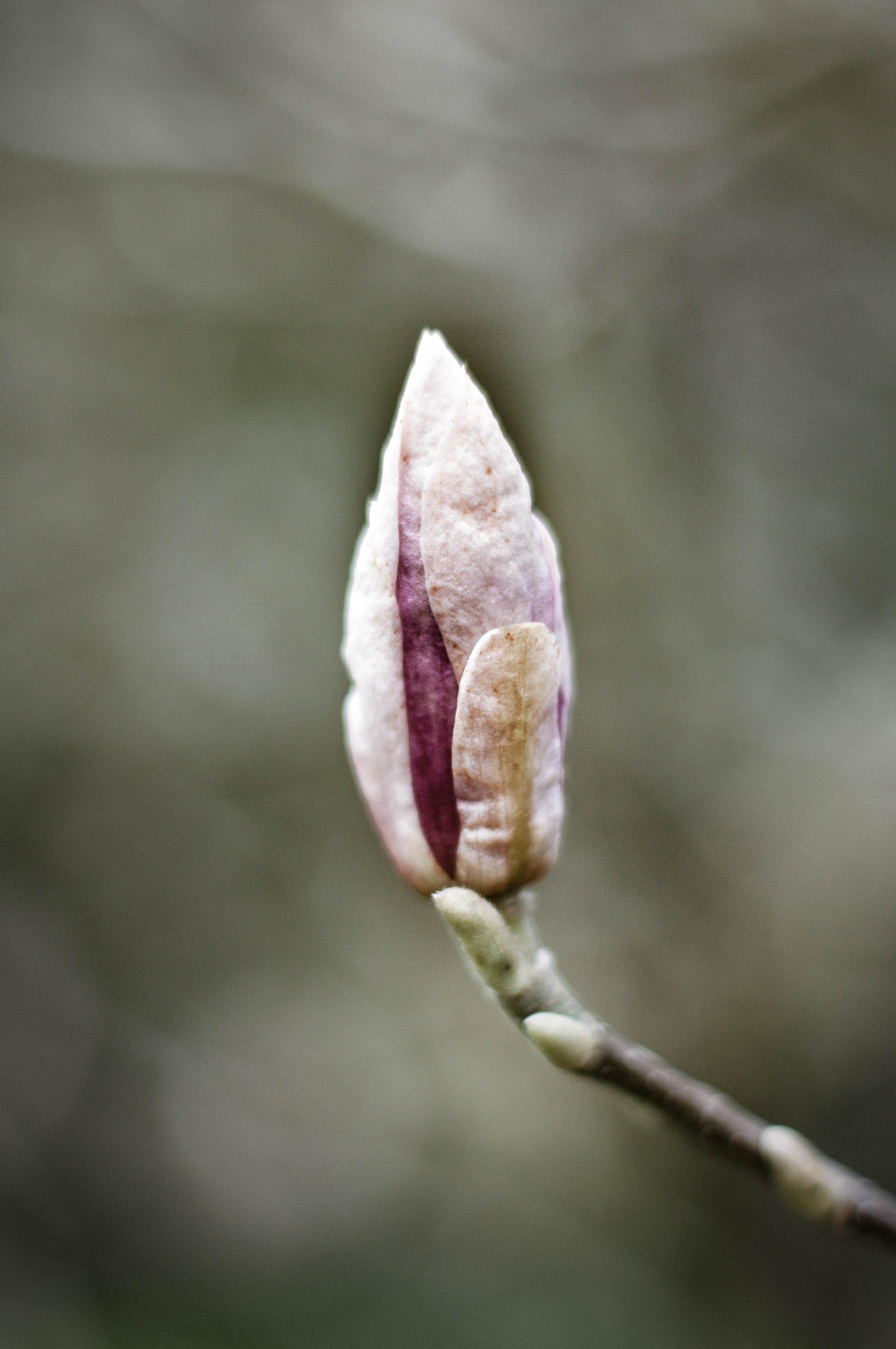 Magnolia love.jpg