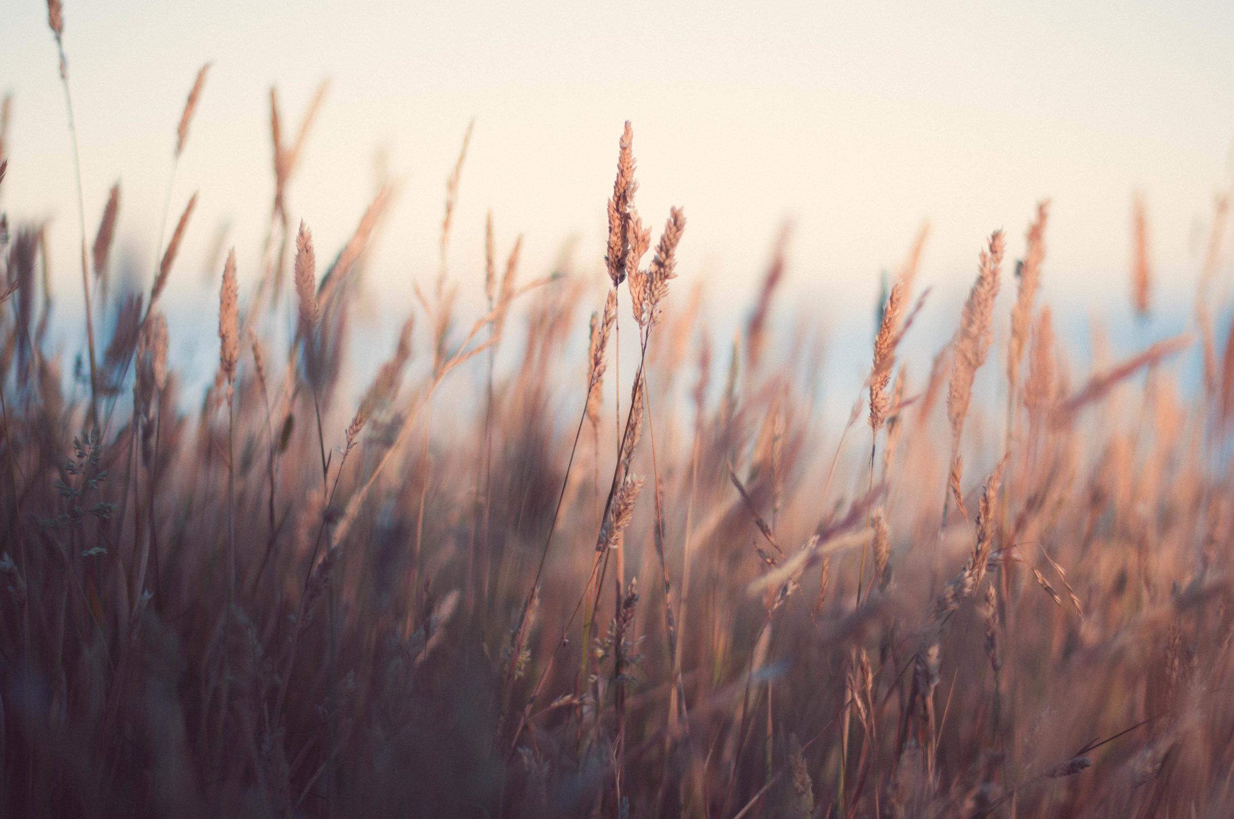 coastal grass.jpg