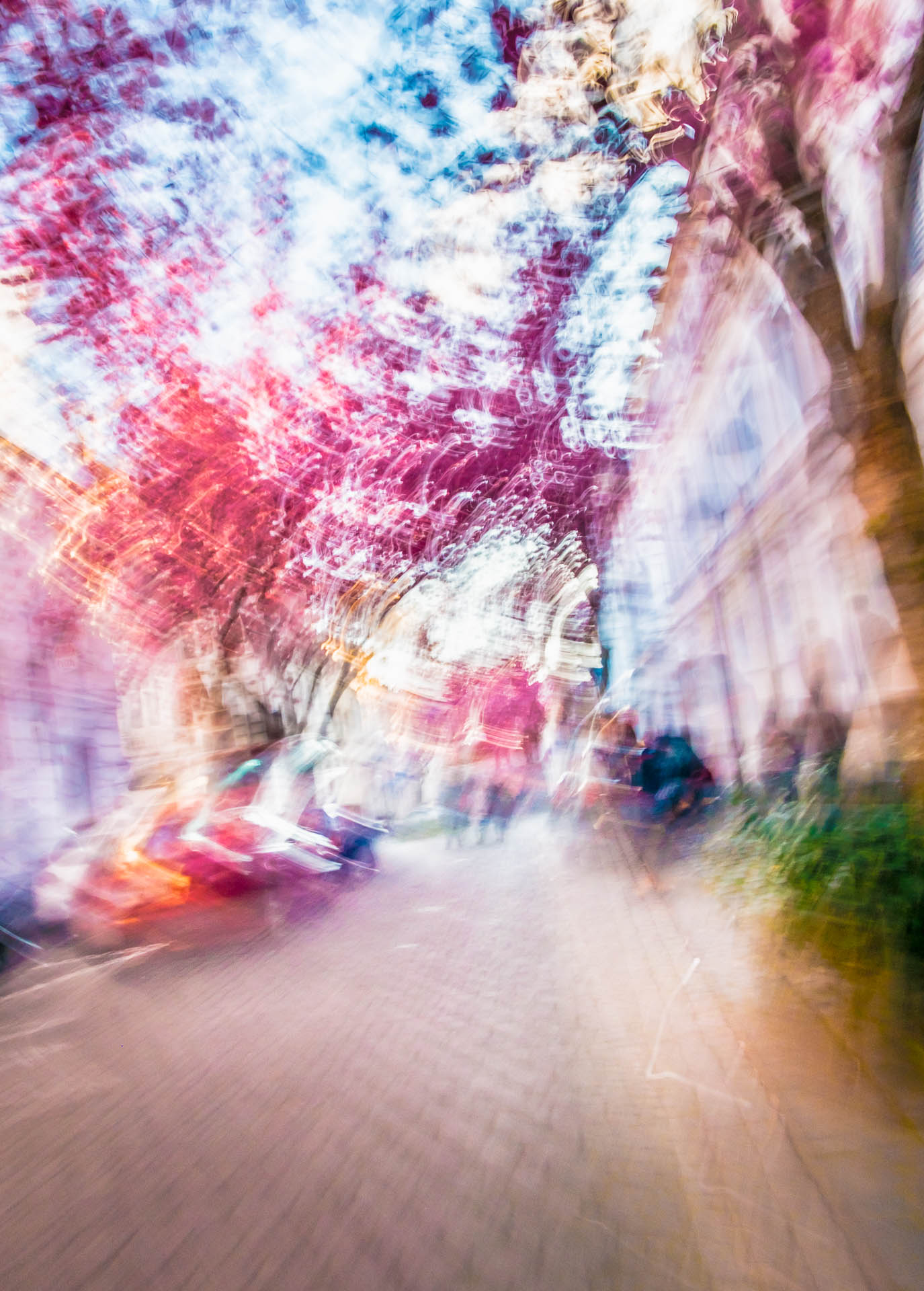 Bonn_Cherries_Movingscape-DSCF7241-Edit-1.jpg