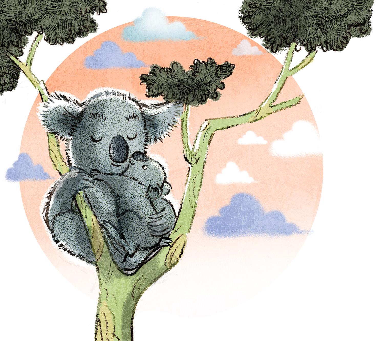 koala hug.jpg