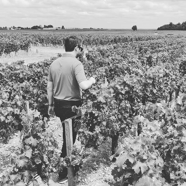 """""""The Burgundy model in Bordeaux"""" is what @componentwine does with their three specific single vineyard sites. What does that mean? . . It means, in a region where even small Châteaux are working on blends from over 8 hectares (20 acres) and large Château have holdings up to over 80 hectares (Château Margaux) from multiple block vineyards & different varietals, we choose to express focused single block, single vineyard wines from single varietals. (For example, this is the """"Demi-Lune"""" lieu-dit which produces structured-yet-finessed Cabernet Sauvignon from the heart of Saint-Estèphe on the Left Bank). This single site & single varietal expression allows us to tell an in-depth and rarely told story in Bordeaux. Something we feel is more needed and relevant than ever in the region today. . . This is the site, with classical fine gravels, slight grade toward the river, surrounded by stressed and dry vines that are racing to do one thing: produce the best fruit possible to survive. In the first video, we are pruning the vines last attempt at producing more fruit - which shuts down their """"more fruit wish"""" and allows that nutrient focus to go to the clusters we have left on the vine to create the wines. . . #componentwine #lieudit #singlevineyard #singlevarietal #bordeaux #burgundyinbordeaux"""