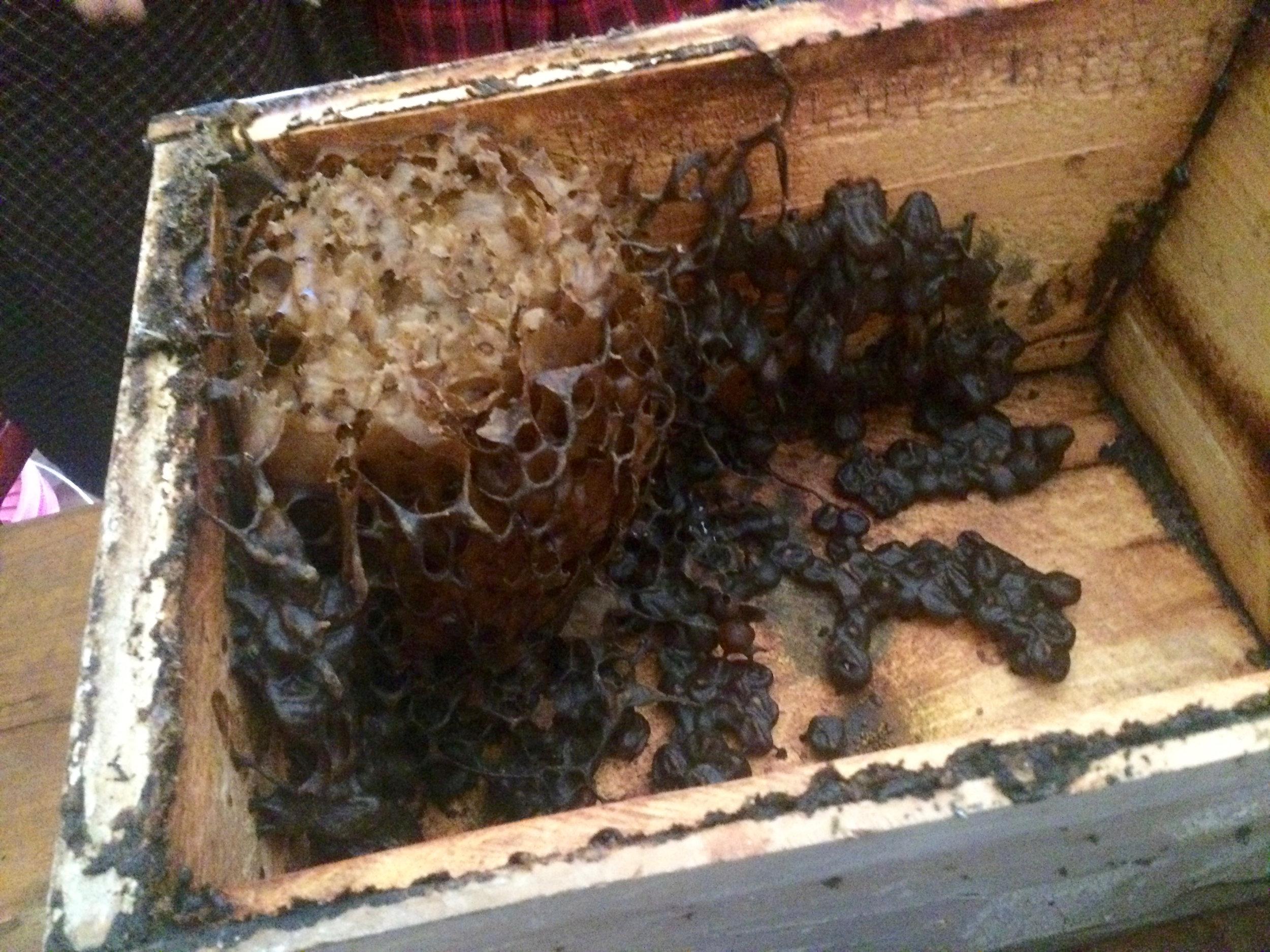 Inside a Stingless Beehive