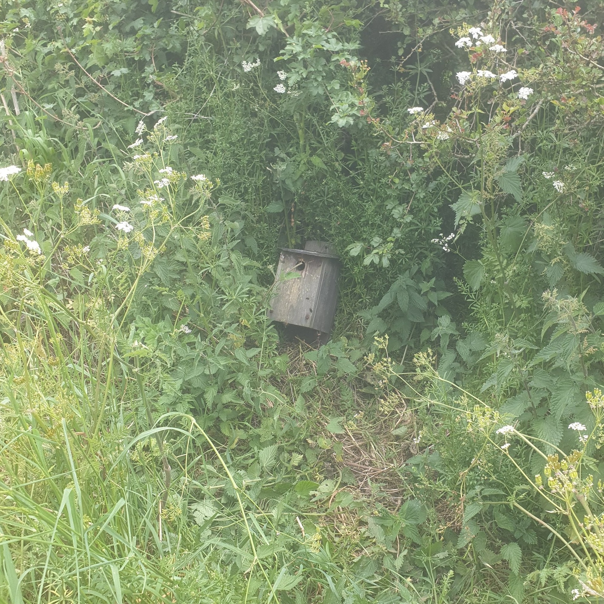 Relocated bee nest